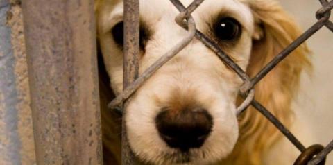 Projeto quer obrigar agressores de animais a pagarem despesas veterinárias, em Goiás