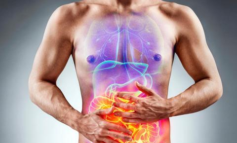 Conheça as principais mudanças na microbiota intestinal