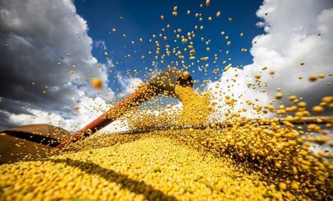 Agropecuária responde por 82,8% das exportações goianas em março