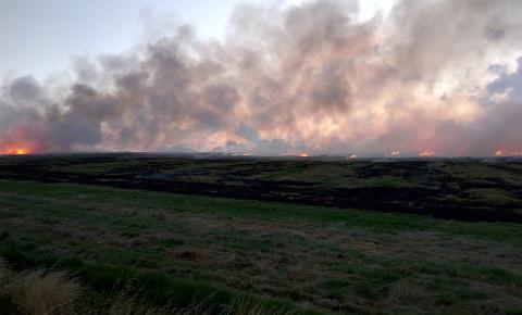 Recuperação de solos de lavouras afetados por queimadas exige atenção