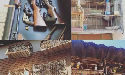 Operação integrada entre as forças de segurança de Pires do Rio resulta em apreensão de armas de fogo e elucidação de crime ambiental